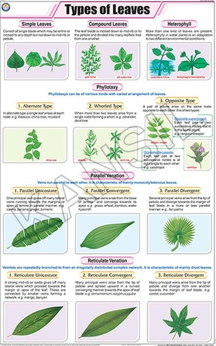 Types of Leaves Chart