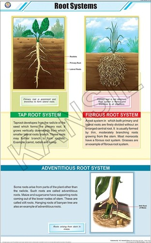 Root System Chart