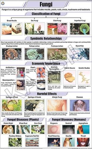 Fungi Chart