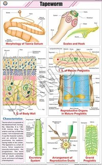 Tapeworm Chart
