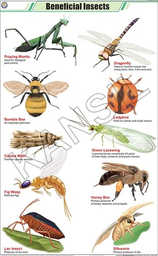 Beneficial Insects Chart