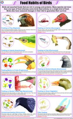 Food Habits of Birds Chart
