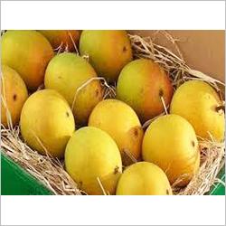 Alphanso Mango Pulp