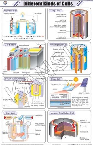 Different Kinds Of Cells Chart