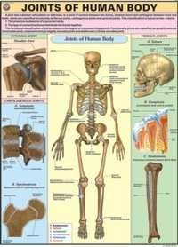 Joints of the Body Chart