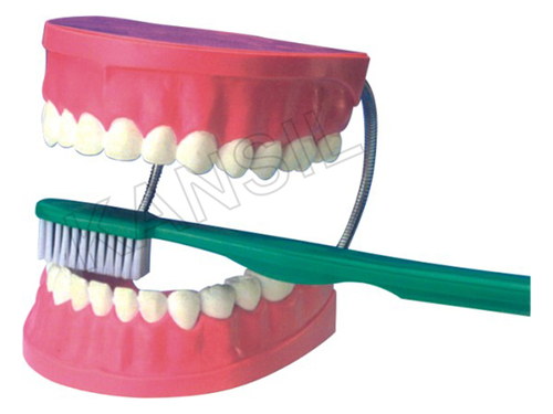 Dental Care Model