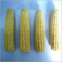 Frozen Corn On Cobs