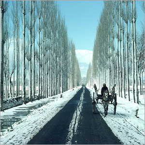 Srinagar Tours
