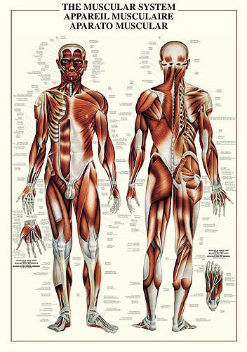 Anatomical Chart Book