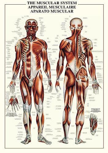 Anatomical Chart Book