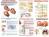 Charts on Embryology