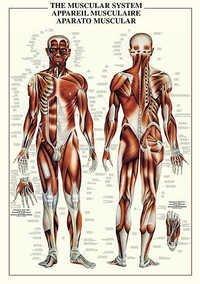 Histology Charts