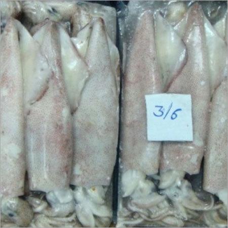 Squid Whole Semi Block