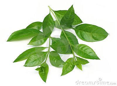 Lawsonia Inermis Extract
