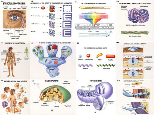 Microbiology Charts