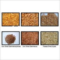 Dried Fish Feed