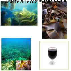 Seaweed Extracts