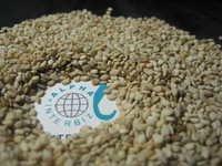 Natural Sesame Seeds 99/1/1