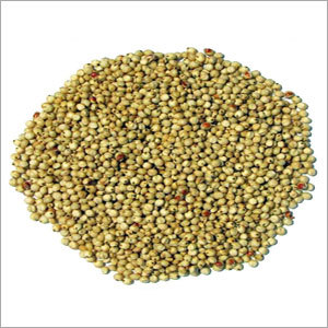 Sweet White Sorghum