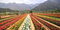 Kashmir itineraries