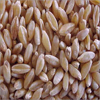 Polished Durum Wheat