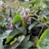 Cover Crops & Green Manuring Seeds