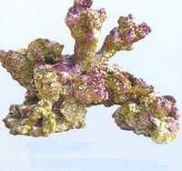 Aquapro coral TZ-H 401