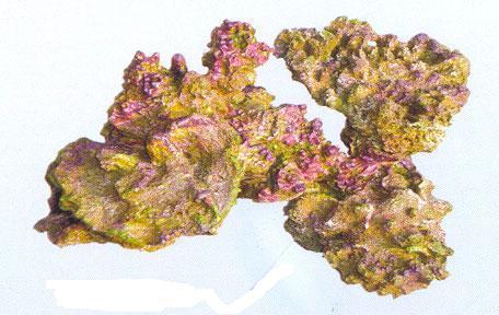 Aquapro coral TZ-H 302