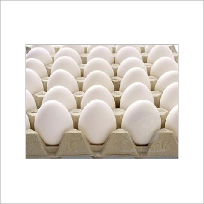 Poultry Eggs