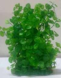 CHICOS CH M 914 AQUARIUM PLANT, 25-30 CM