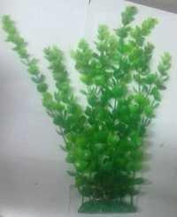 CHICOS CH L,M-1518, AQUARIUM PLANT, 15