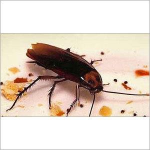 Cockroach Control by S B Gel