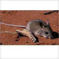 House Rats Control