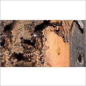Termite Control Chemical