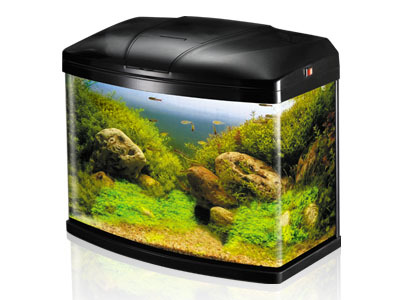 Sobo Aquarium T 48f Fish Aquarium Home H 16 17 Vikas Marg