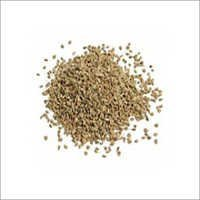 Ajwain Seed Extracts