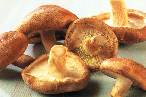 Shiitake Mushrooms Extract