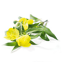 Evening Primrose Oil Extract