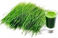 Wheatgrass Extract Powder
