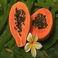 Papaya Extract Powder