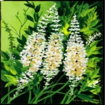 Black Cohosh Extract