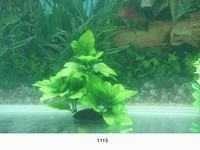 MJ 1115 AQUARIUM PLASTIC PLANT