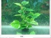 MJ 1230 AQUARIUM PLASTIC PLANT