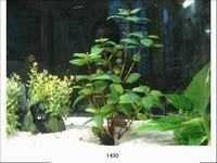 MJ 1430  AQUARIUM PLASTIC PLANT