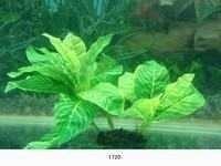 MJ 1720 AQUARIUM PLASTIC PLANT