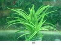MJ 1825 AQUARIUM PLASTIC PLANT