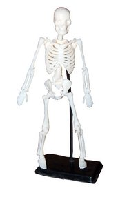 Mini Skeleton Model