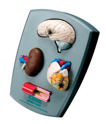 Four-Piece Hypertension Model