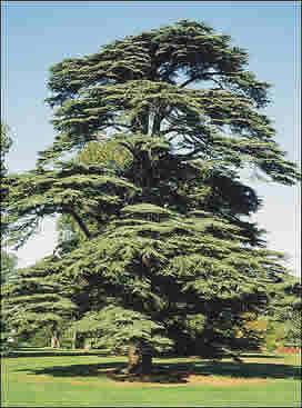 Multi Purpose and Ornamental Tree Seeds