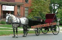 Elegent Black Victoria Horse Carriage